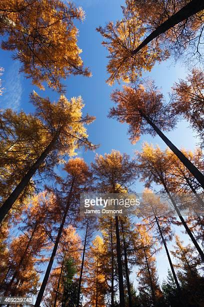 Forest of Dean, Autumn.
