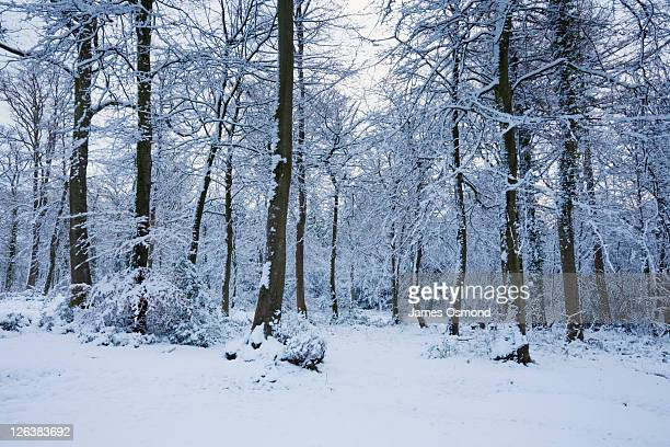 Forest of Dean in Winter. Gloucestershire. England. UK.