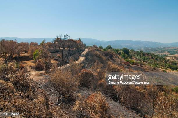 A forest of secular trees near to an ancient monastery of the National park of Sila is burnt because of the fires that are hitting the area on August...