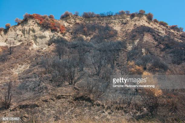 A forest of secular trees of the National park of Sila is burnt because of the fires that are hitting the area on August 03 2017 in Crotone Italy An...
