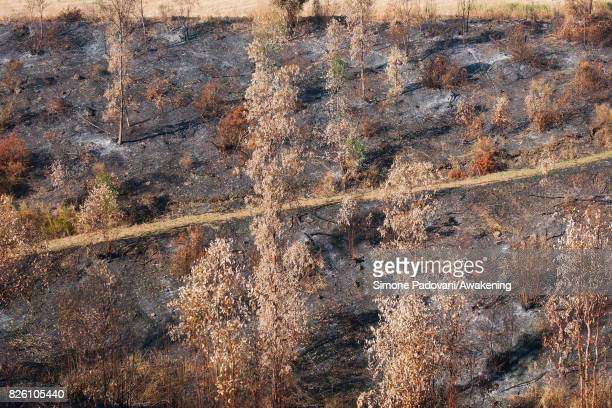 A forest of secular trees property of Adolfo Gustavo Berlingieri and his family is burned because of the fires that are hitting the area of the...