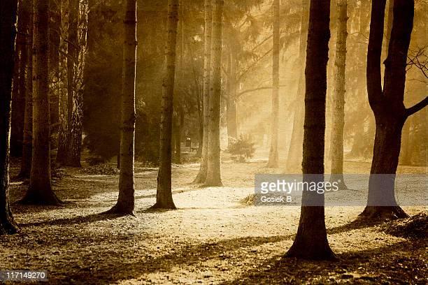 Foresta in una nebbia di mattina