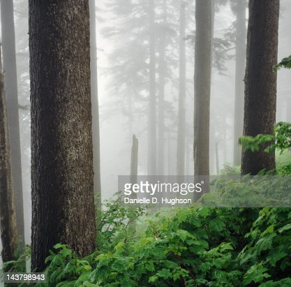Forest on Dog Mountain : Foto de stock