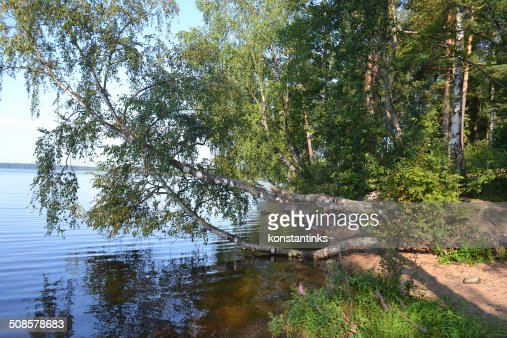 Forest on the banks of lake : Stock Photo
