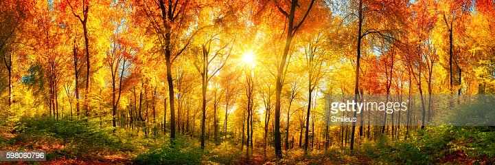 Forest panorama in autumn : Stock Photo