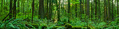 a panoramic / of a beautiful forest / a lot of detail