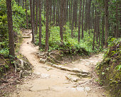A choice of footpaths ahead in a forest - one uphill, and one downhill.