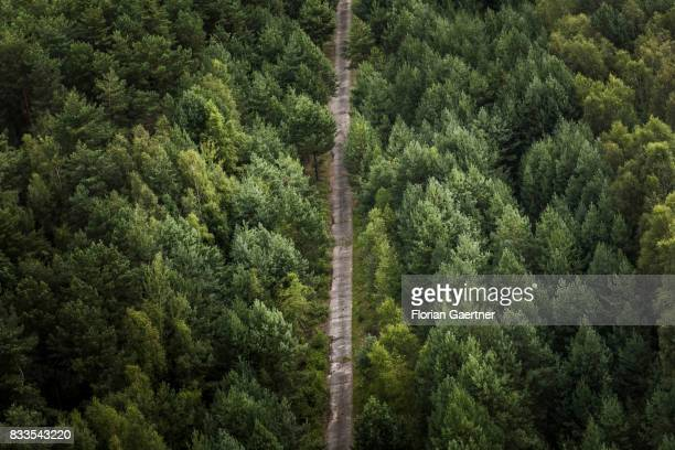 A forest path through a mixed forest is pictured on August 04 2017 in Bernsdorf Germany