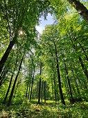 Forest on the island Rügen