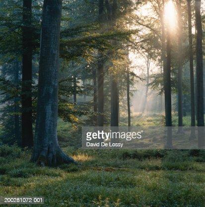 Forest : Foto de stock