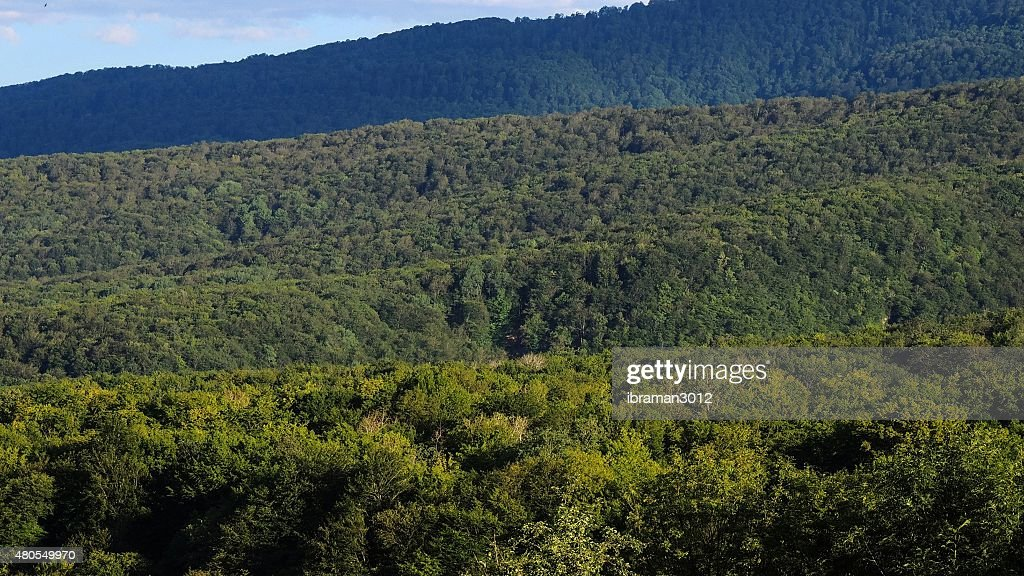 Bosque : Foto de stock