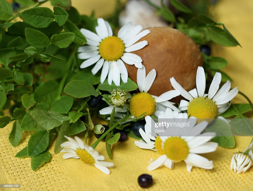 Forest plants on a napkin : Stock Photo
