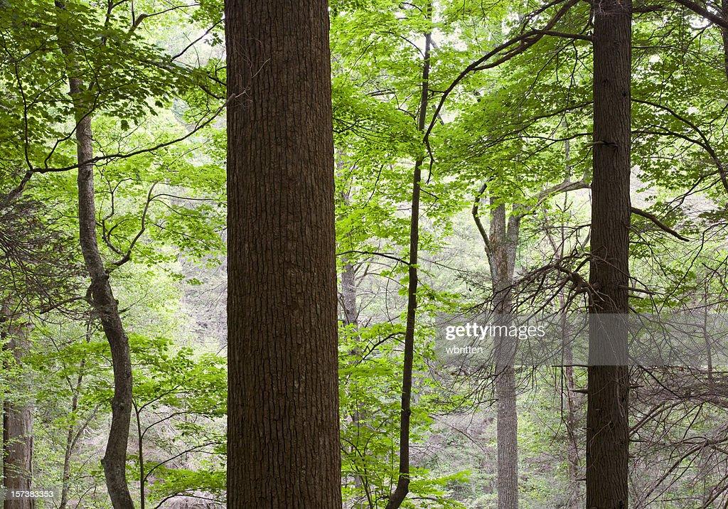 Forest Primeval Series (XXL)