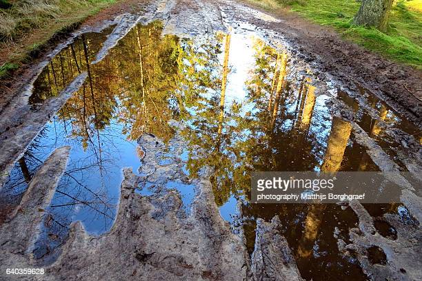 Forest reflected in puddle