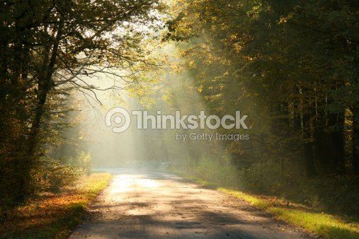 Forest road in autumn morning : Stock Photo