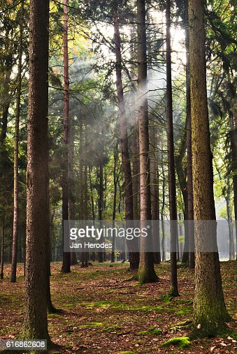 Forest road in autumn with sunrays : Stock Photo