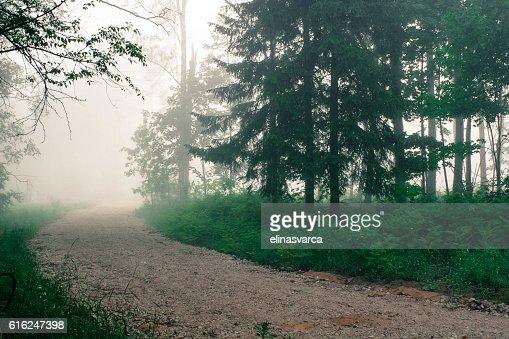 Camino en el bosque de niebla : Foto de stock