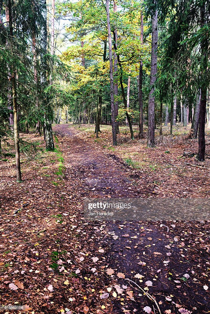 Forest road in the fall : Stock Photo