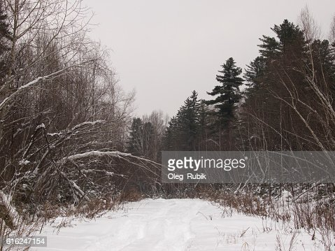 Forest road in the winter evening : Stock Photo