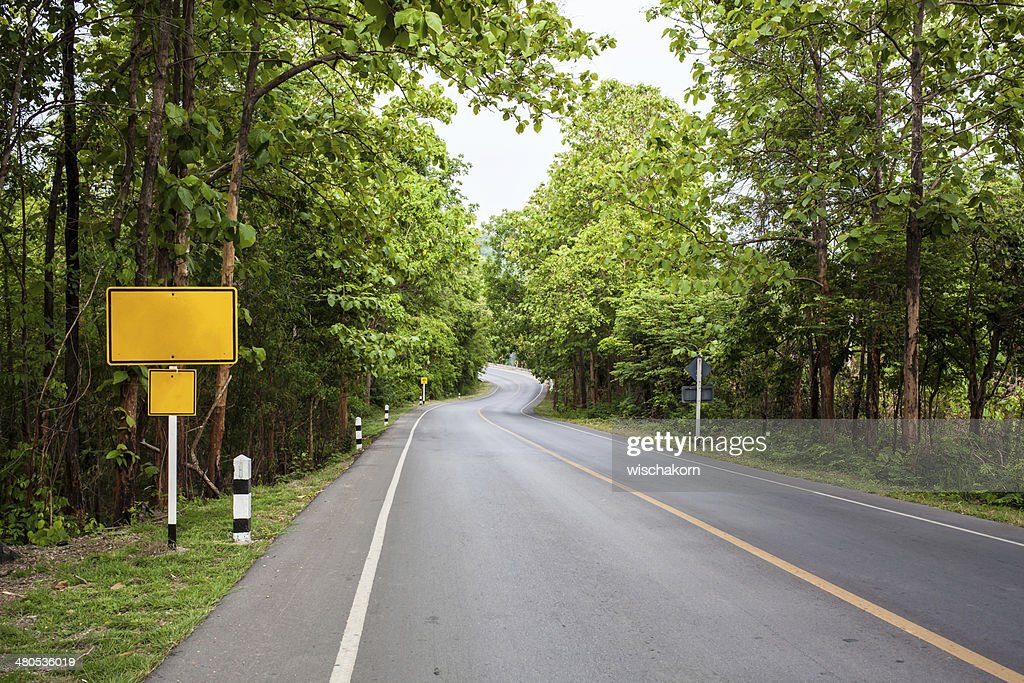 Forest road : Stock Photo