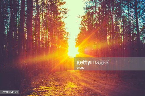Forest Road Sunset Sunbeams : Stock Photo