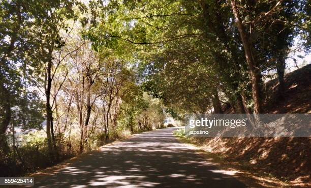 Forest Scene. Forest Scene. Road through a lush forest
