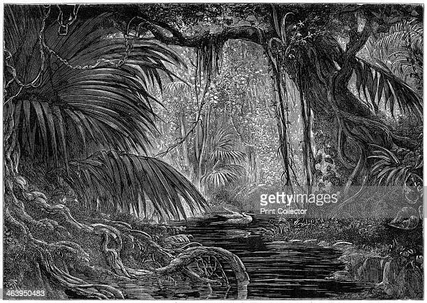 A forest scene in Peru 1877