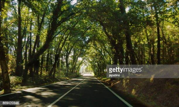 Forest Scene. Road through a lush forest