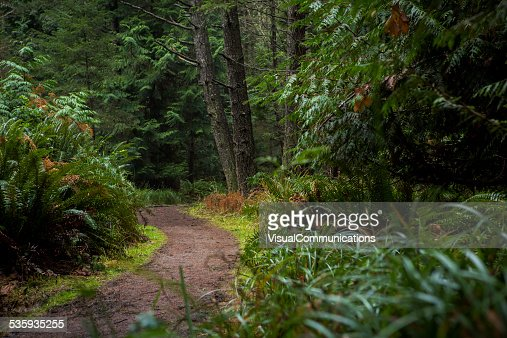 Forest Scenery with footpath : Stock Photo