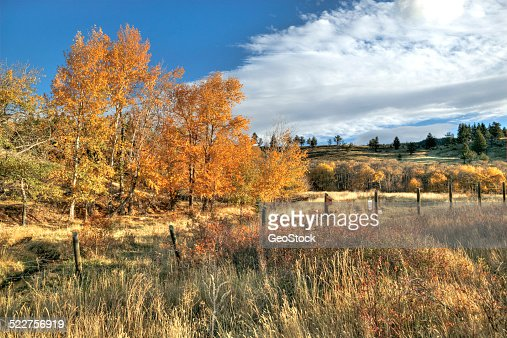 A forest scenic in autumn bloom