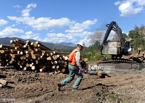 US Forest Service employee Ken Cunning walked past beetle kill timber in Summit County Colorado Friday morning August 27 2010 The US Forest Service...