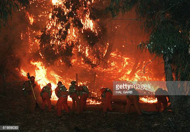 Forest service firefighting crew fights the forest fire above Malibu early 03 November 1993 after a wildfire burned through the area late 02 November...