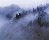 Forest shrouded in fog,  Katsuyama,  Fukui Prefecture,  Japan