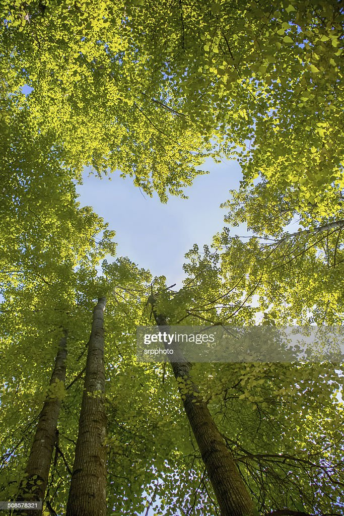 Forest sky heart : Stock Photo