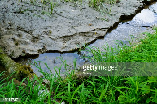 Forest stream : Stock Photo