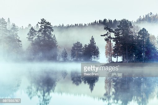 Forest surrounded by fog and mist