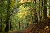 Trail through the woods in early autumn. Poland.