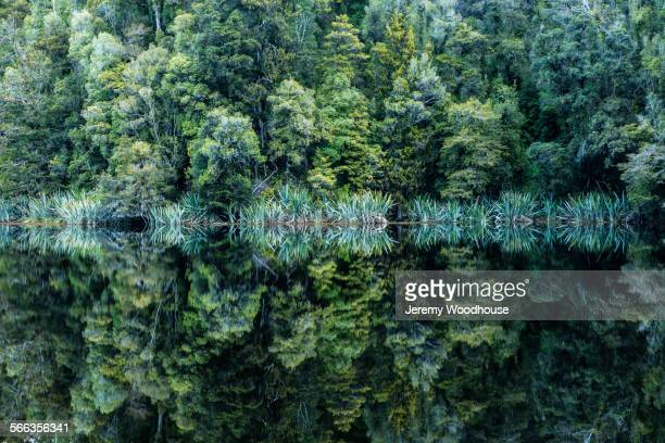 Forest trees reflecting in still remote lake