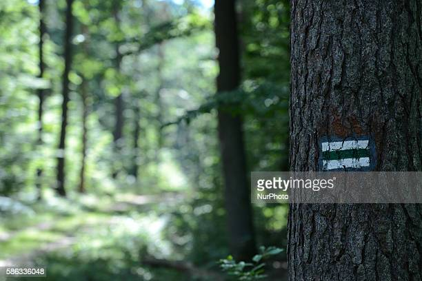 A forest trial sign seen on a tree in Krakow Poland on August 5 2016 The nature reserve 'Bor' is located near a small town Glogow Malopolski in...