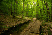 Forest Walk, Lake Annecy, Talloires
