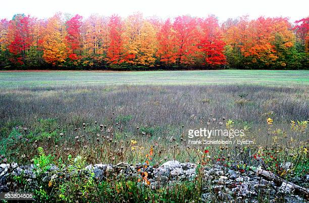 Forest With Bright Autumn Foliage Seen From Across Wild Field