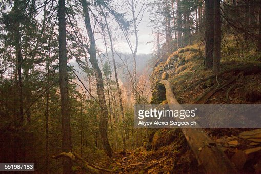 Forest with fallen tree, Sarsy Village, Sverdlovsk Oblast, Russia
