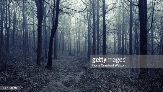 Forest with morning fog : Stock Photo