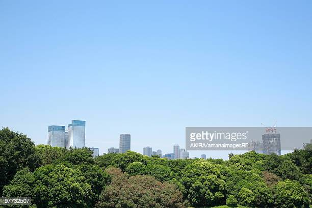 Forest with skyscrapers in background, Koto ward, Tokyo Prefecture, Honshu, Japan