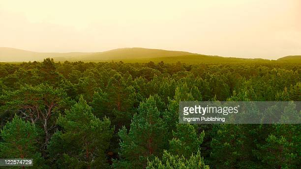 Forested landscape fading into hazy hills.