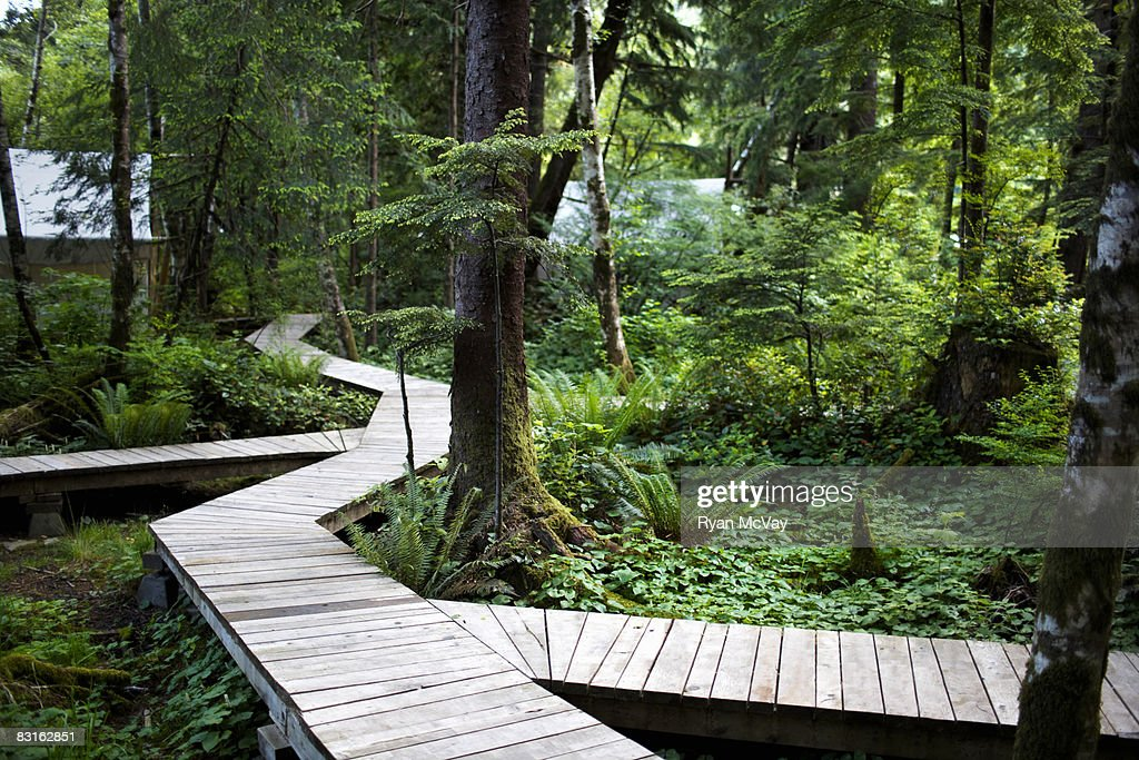 Forested pathway leading to tents. : Stock Photo