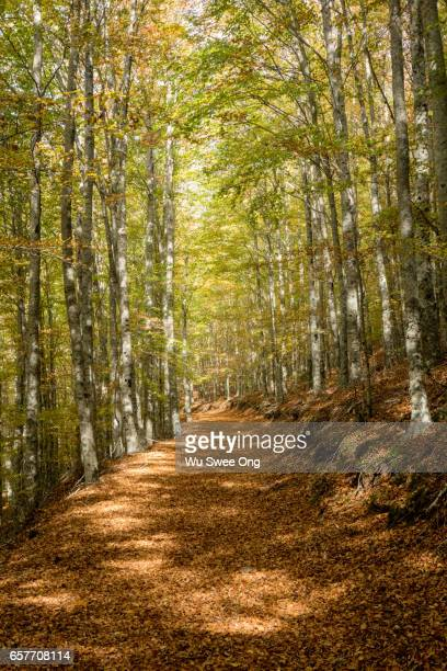 Forested Trail in Manteigas