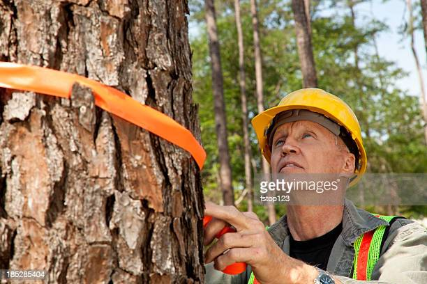 Forester or builder marking trees with orange ribbon.