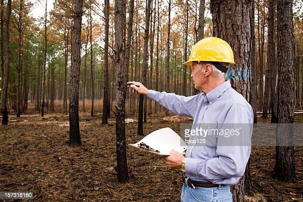 Forester, surveyor, environmentalist man. Hardhat, studying environmental conservation, burned forest