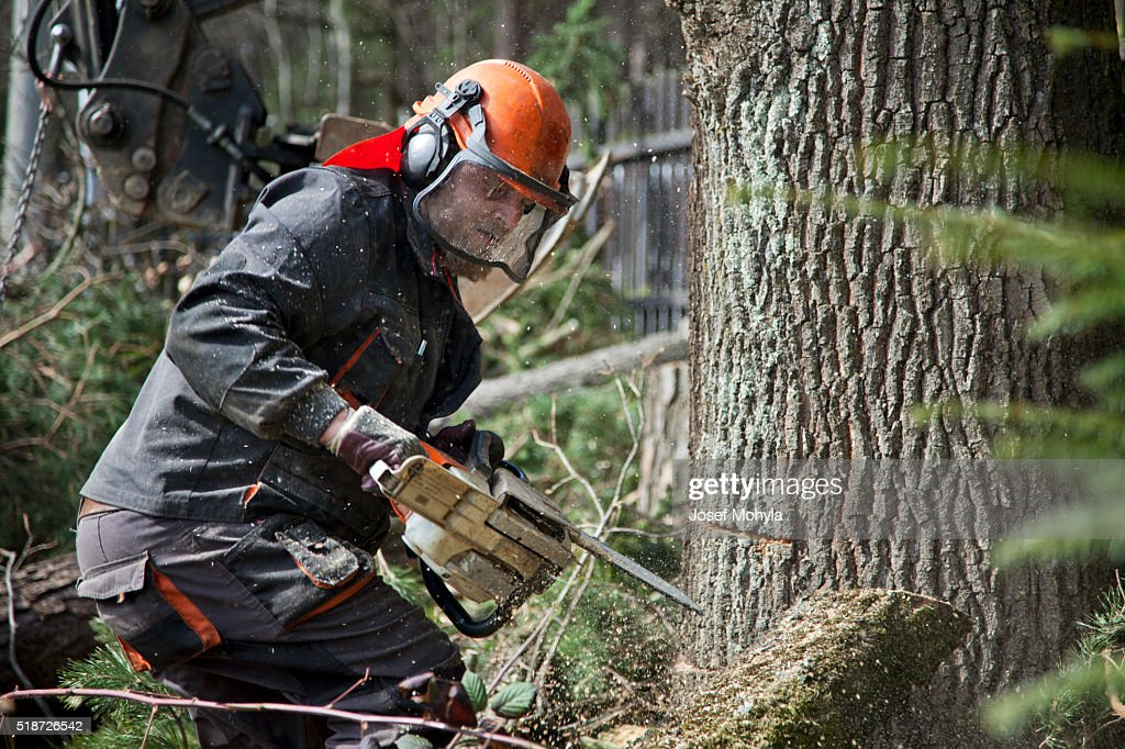 Forestry worker with chainsaw : Stock Photo